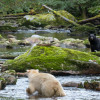One white and one black bear in the same frame