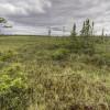 black spruce wetland in Ontario's Far North