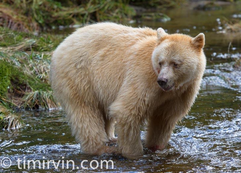 Great Bear Tours Price