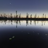 Black spruce reflected in a pond with lily pads at sunset.