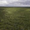 A woodland caribou trail weaves trough a bog in Ontario's Far north
