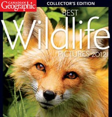 Canadian Geographic Best Wildlife Photos 2012